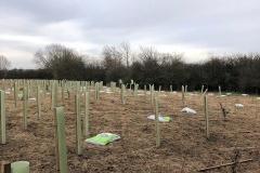 Aylesbury-Tree-Planting-1-e1523486117676