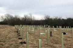 Aylesbury-Tree-Planting-2-e1523541861680
