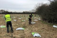 Aylesbury-Tree-Planting-3-e1523541832624