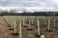 Aylesbury-Tree-Planting-4-e1523541803249