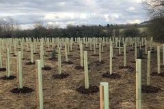 Aylesbury-Tree-Planting-5-e1523486185498