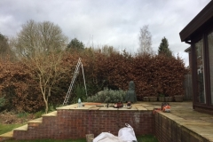 Hedge-Reduction-Hemel
