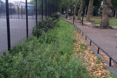 Highbury, Islington, Shrub Removal and Seed