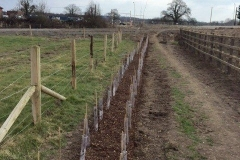Reading, Native Mix Hedge Planting