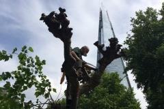 Southwark, Treeworks