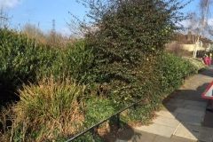Wanstead, East London, Shrub Removal and Seed